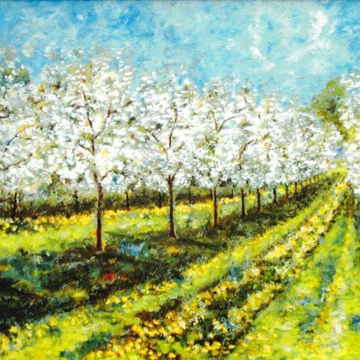 Kirsebærplantage på H. I. Hansens gods på Sydfyn